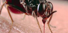 Mengenai gigitan serangga dan rawatan mereka