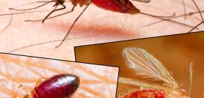 Gigitan pelbagai jenis serangga dan gambar mereka