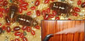 Pada suhu apa bed bugs mati dan akan rawatan rawatan stim?
