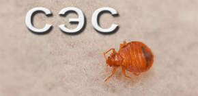 Sanitasi premis dari bedbugs menggunakan Sanepidemstantsii (SES)