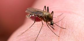 Bermakna untuk melindungi daripada gigitan serangga: semakan pilihan yang berkesan