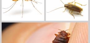 Penghalau serangga insektisida di rumah: semakan ubat