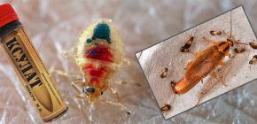 Ubat untuk bedbugs dan lipas Ksulat, serta ulasan penggunaannya