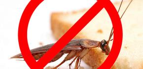 Pemusnahan serangga: tip berguna dan nuansa penting