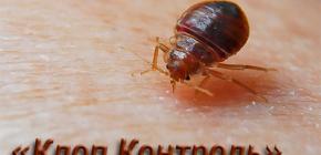 Kawalan Perosak Kawalan Bedbug dan Ciri-ciri Kerja